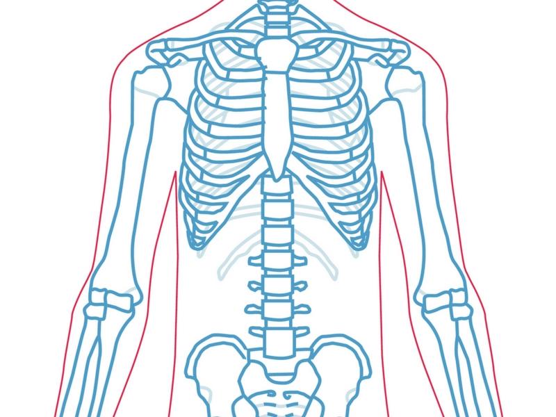 yogaed-skeleton.jpg