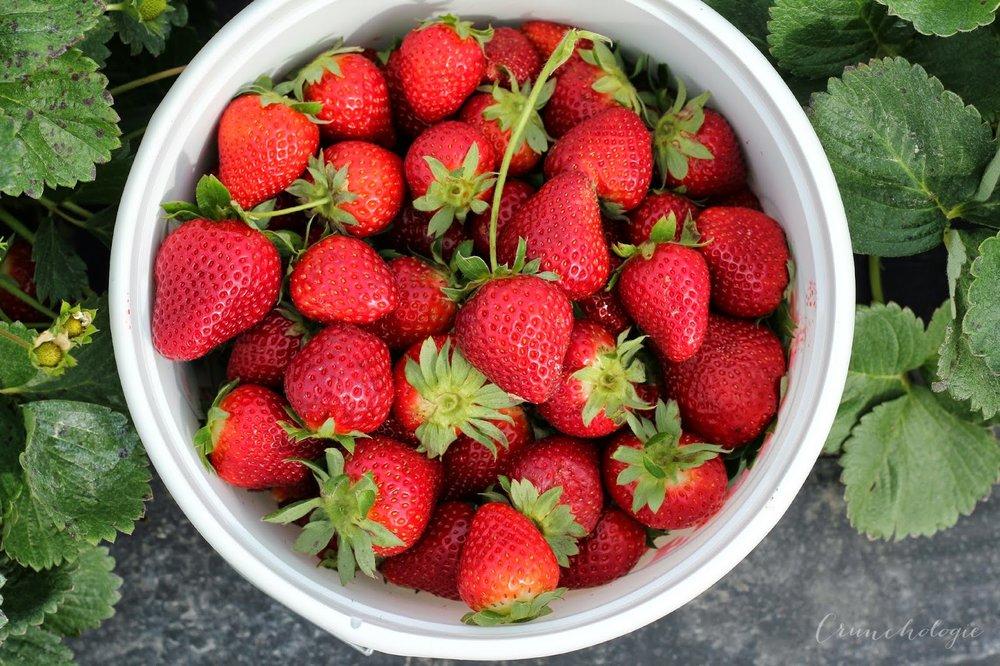 Strawberry2BBucket-1.jpg