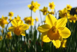 Springpic