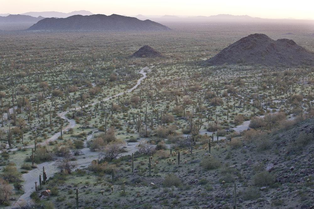 Sonoran_Desert_NM_(9406656246).jpg