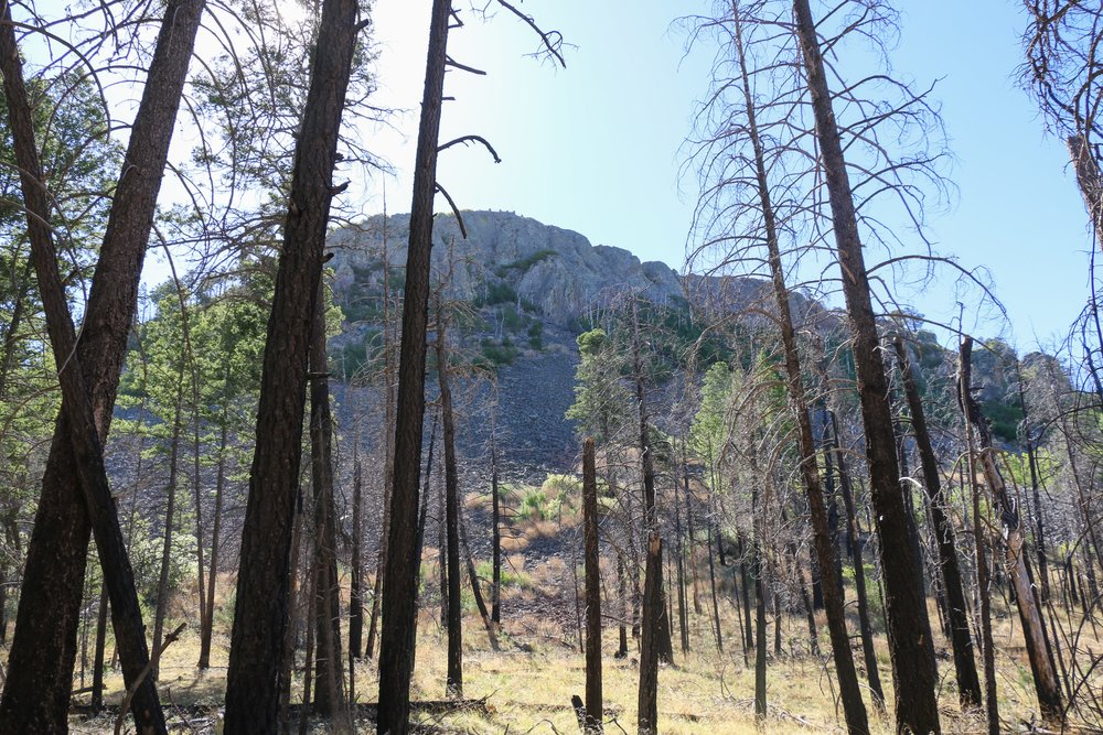 Looking up at Barfoot Lookout. The Horseshoe 2 fire burned much of this area.