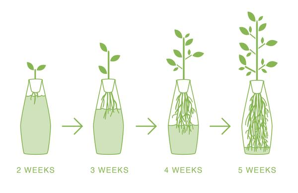 amphora_growth_illustration_CROPPED_grande.jpg
