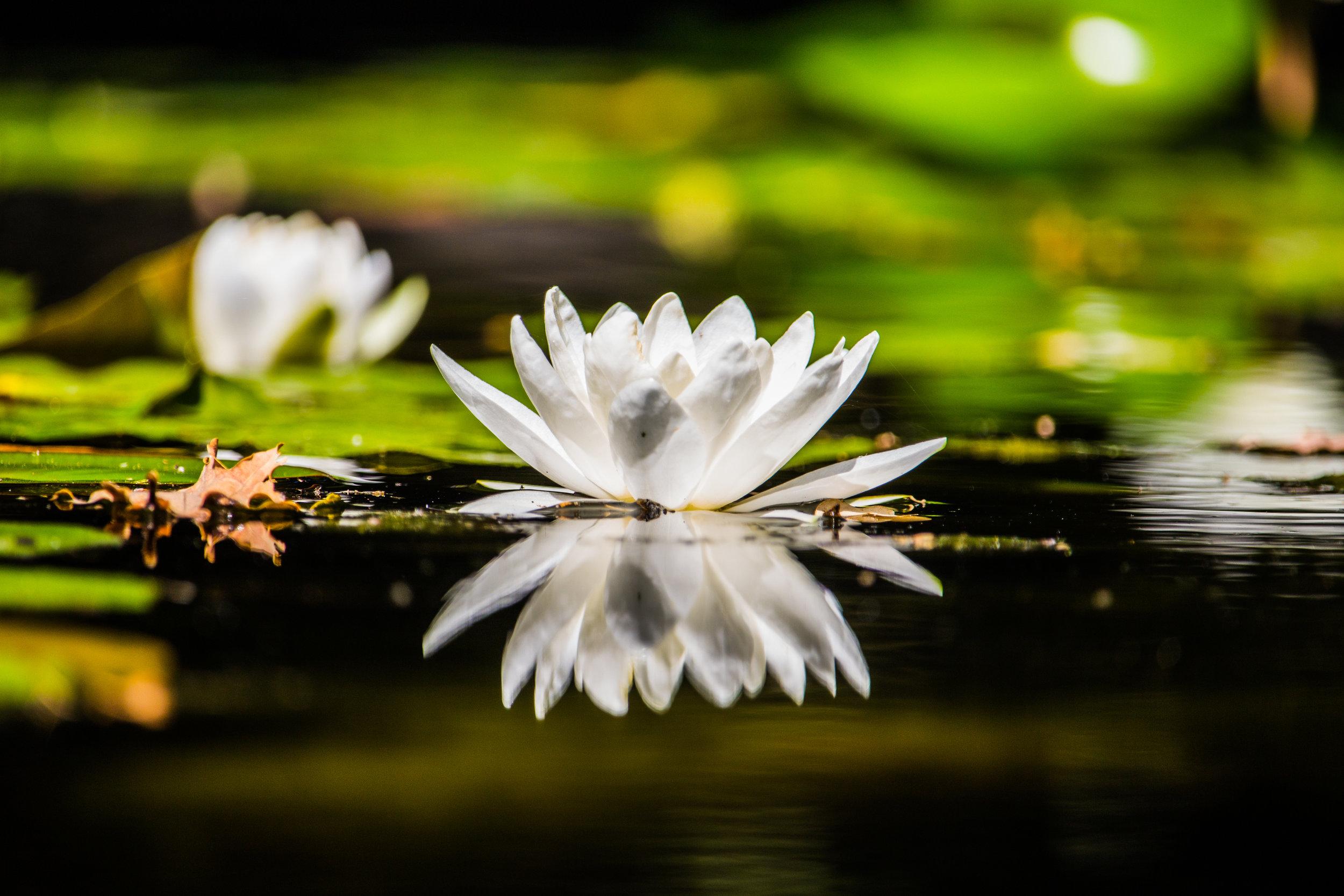 Lotus Healing Center