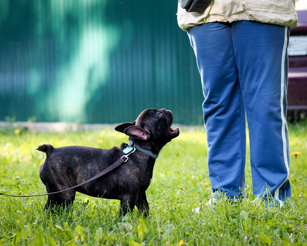 dog on grass.jpg