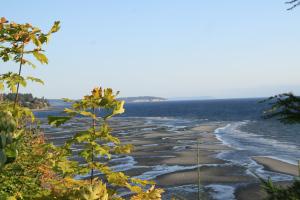 shoreline scene