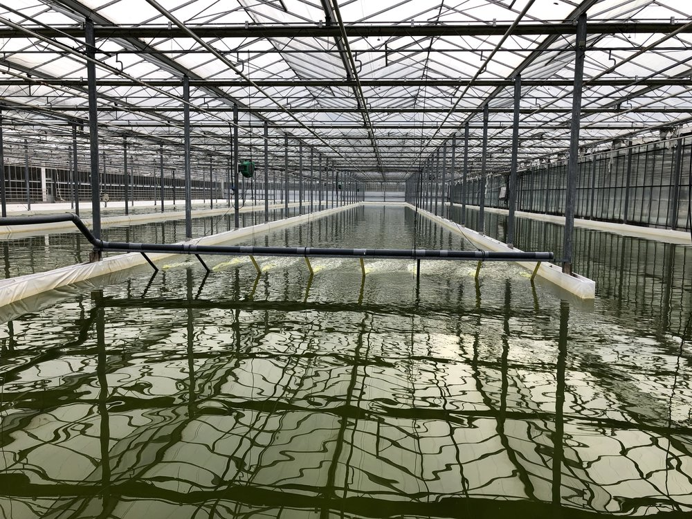 An Algae GreenHouse in Holland we utilize to Influence our nutrition
