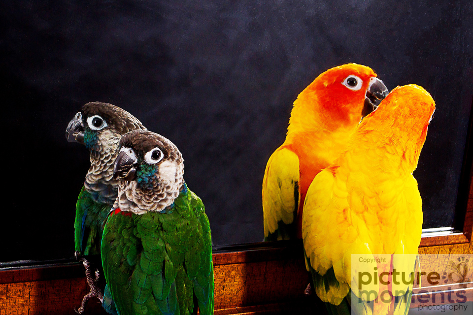 Picture Moments pet family135.JPG