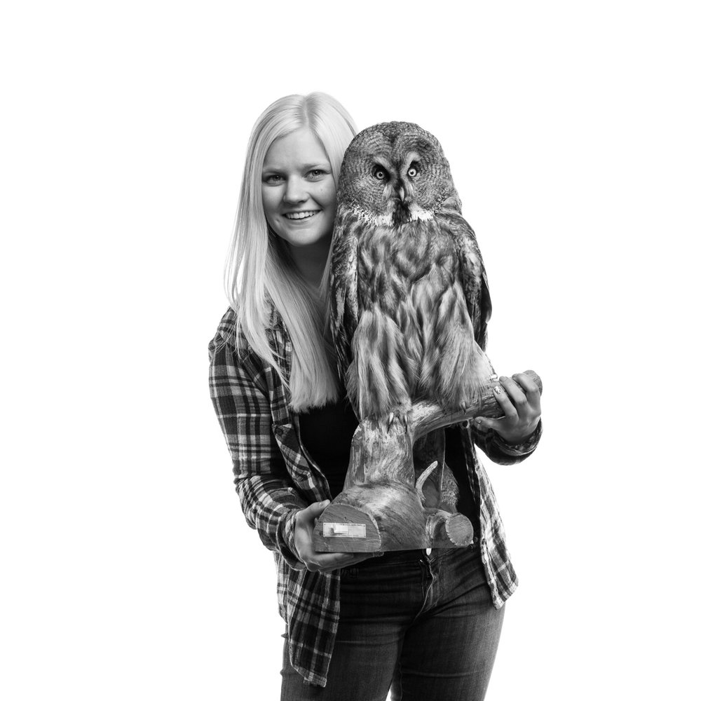 Student portrait with a Great grey owl for SLU, Umeå