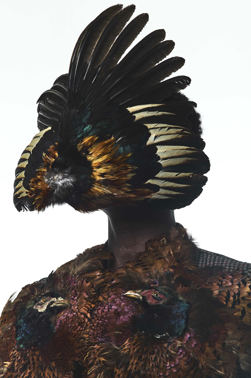Figure 5. 'The Peacock Effect', The Peacock Effect Exhibition, Leica Gallery Los Angeles Jan 2018