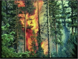 Those of us trained in forestry knew that the extreme fire prevention of past decades had led to very crowded, unhealthy forests. When a fire gets in these forests — which they inevitably will do — the result is an unnaturally intense fire, much different from the less intense fires that used to burn more frequently in less crowded forests.