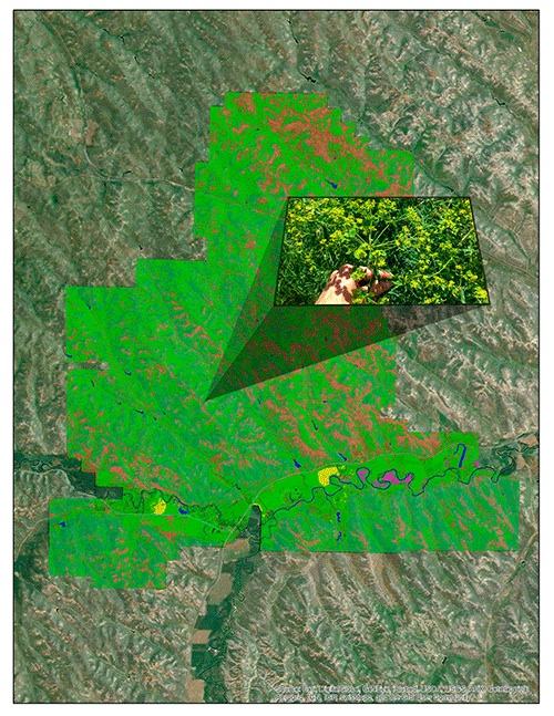 Using satellite imagery embedded with data on reflectance, the UHPSI team will work on developing statistical tools that rapidly scan a large area to locate plants or land-cover of particular interest. In northeastern Wyoming, the team will be using the tools to locate leafy spurge (Euphorbia esula; displayed within the inset image above), an invasive species that displaces native rangeland vegetation.