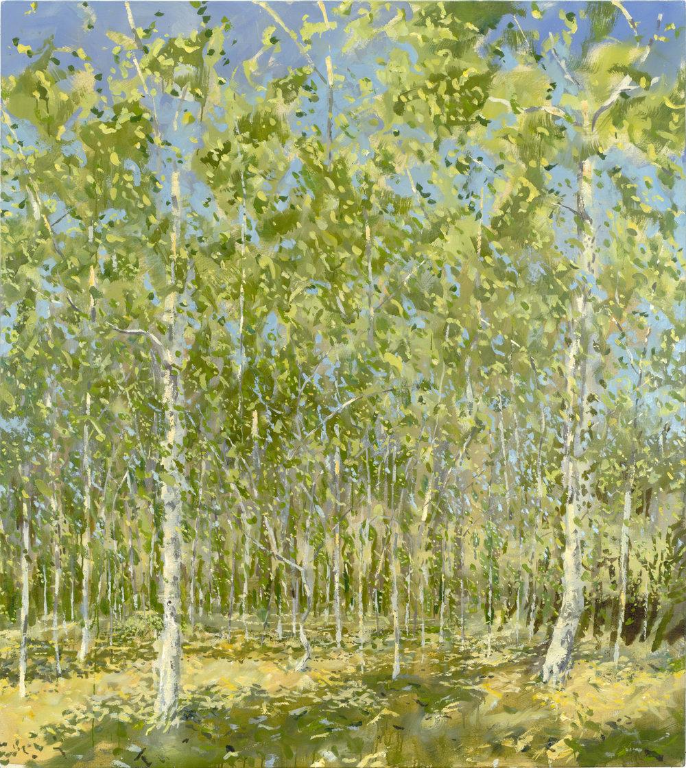 RHSK063 Tengudake Silver Birch Forest Spring Afternoon  ( oil on Linen ) 162.5 x 145.5