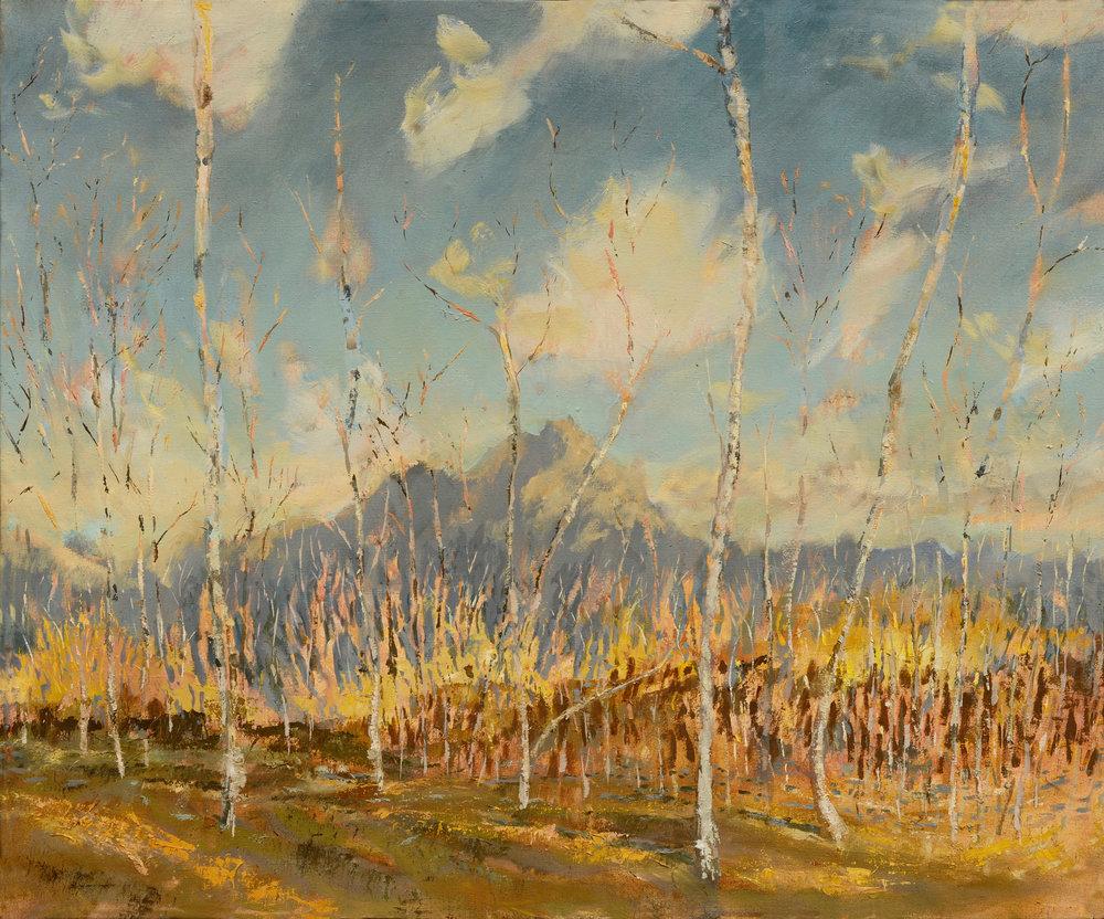RHSK091 Ogura San beyond Silver Birch forest Autumn Evening  ( oil on linen ) 92 x 110
