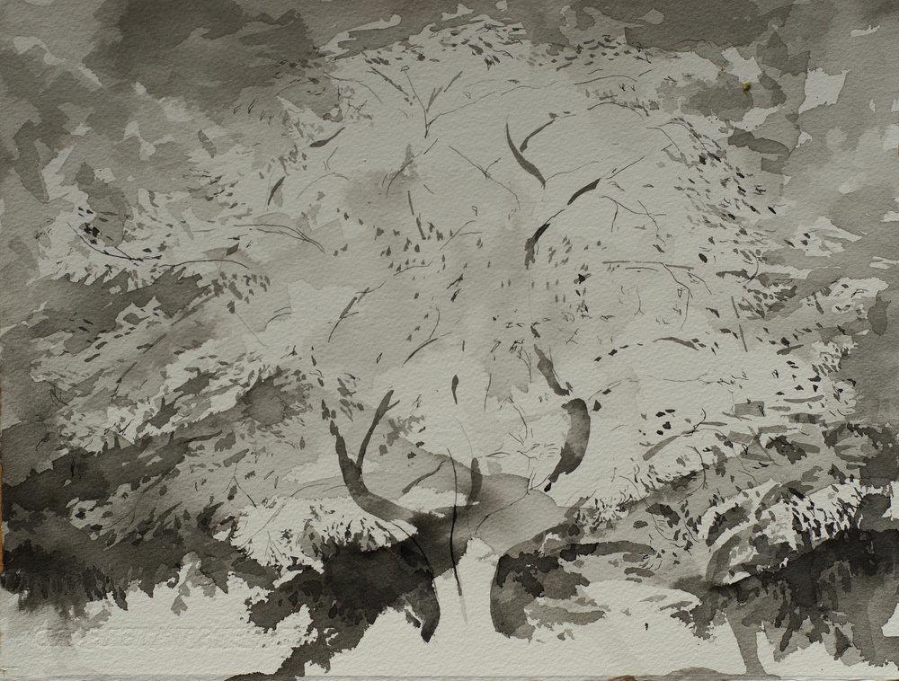 RHSK168 Temple Tree I Kurokawadani Shikoku  ( ink on paper ) 28.5 x 37