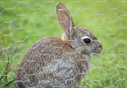 hexagonal_wire_rabbits_115.jpg