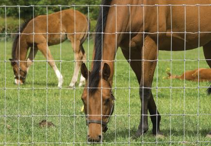 Hampton_net_horses_foals_38.jpg