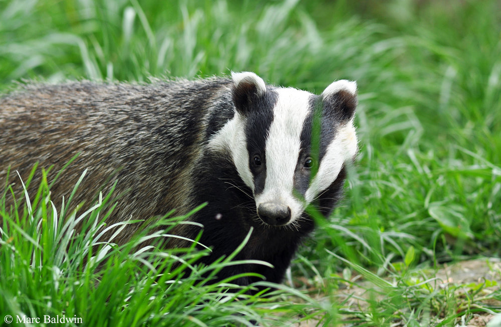 badger_fence_960x275.jpg