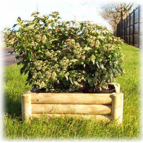roe-planter-0.jpg