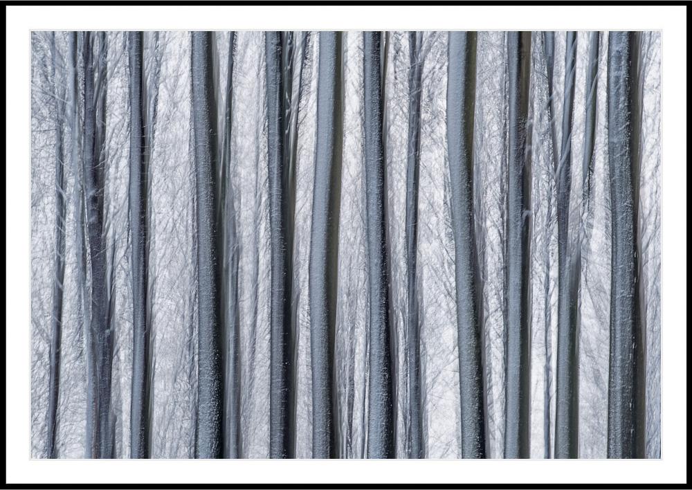 Blurrede-vinterstammer.jpg