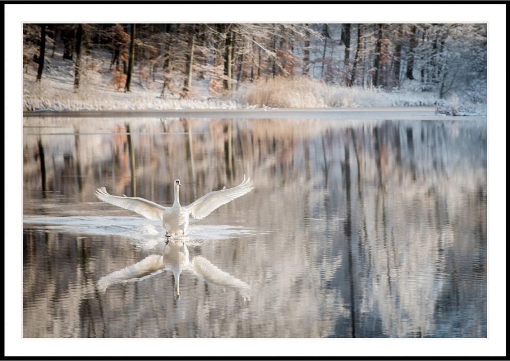 Svanesøen.jpg