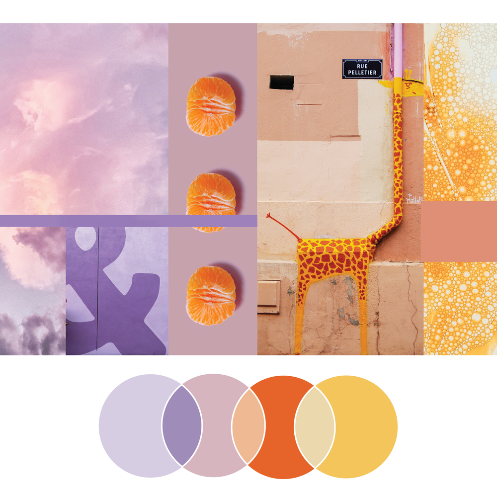 Continuous Discovery | Seed Design Consultancy | color palette scheme