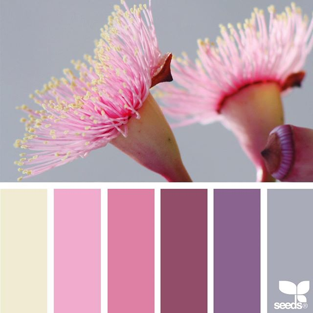 Happy Easter! ... today's inspiration image for { color flora } is by @carolyn.eve ... thank you, Carolyn, for another stunning #SeedsColor image share!