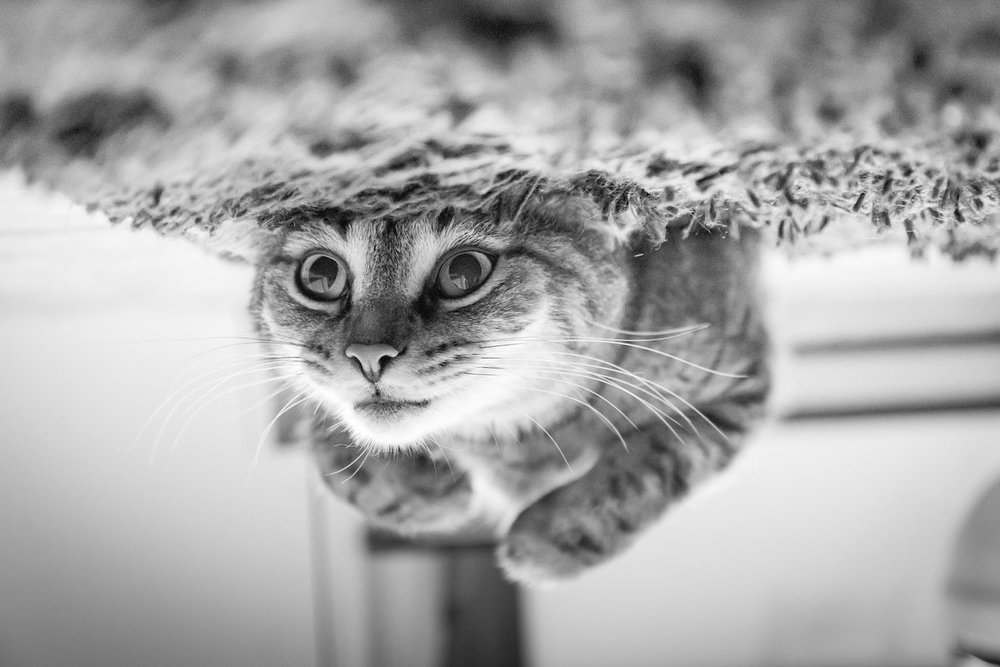 adorable-animal-animal-photography-248280.jpg