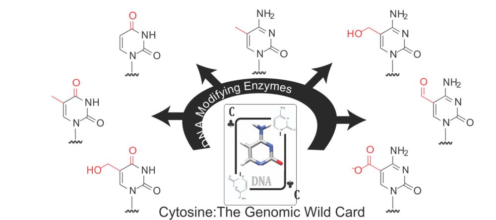 genomic wildcard2.png