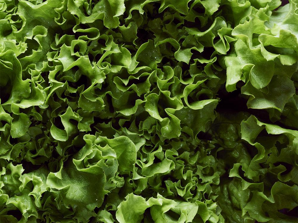 Lettuce copy.jpg