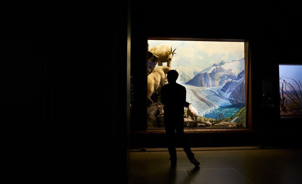 NaturalHistoryMuseum2.jpg