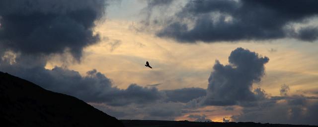 """Soaring Free"" by  Tim  via Flickr."