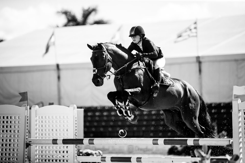 Jenn Gates and Capital Colnardo at Winter Equestrian Festival 2019. Photo by Ashley Neuhof Photography.