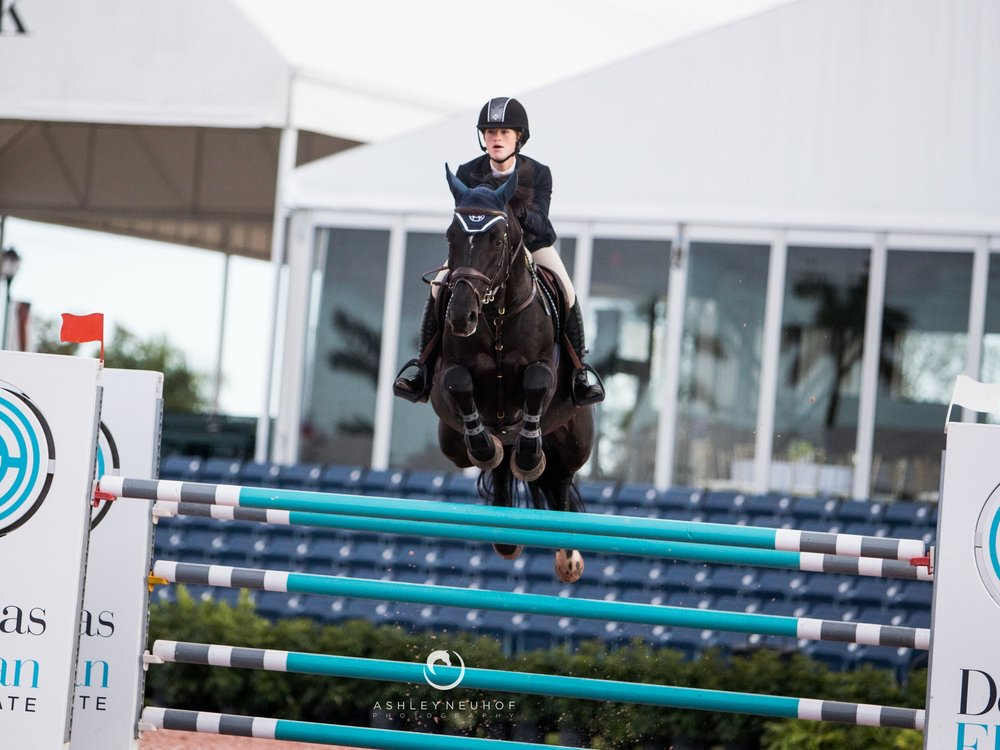 Pacific des Essarts - Born : 2003Breed: Selle FrançaisBarn Name: PacificGender: Male/StallionBreeding: Diamant de Semilly x Totoche du BanneyJoined team: December 2016Ridden by: Jenn Gates