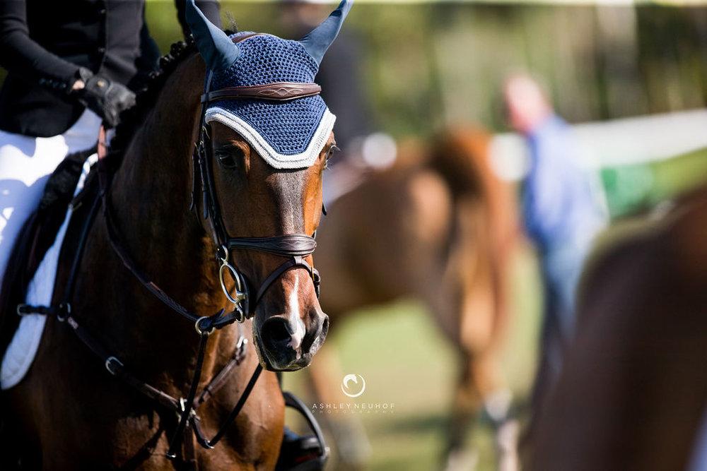 Alex at Winter Equestrian Festival 2019. Photo by Ashley Neuhof Photography.