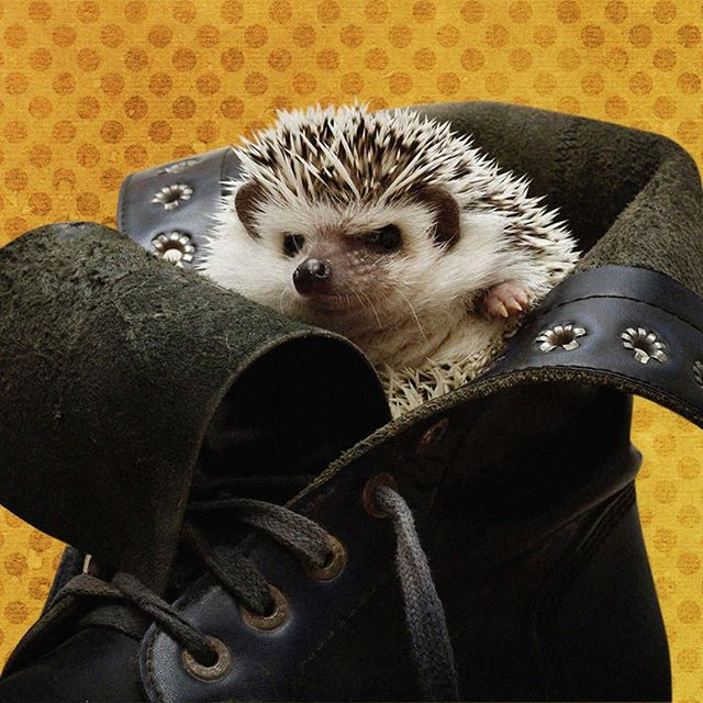Words can hurt just as much as forgetting your hedgehog likes to hide in your shoes. ˙ ˙ ˙ ˙ ˙ ˙ ˙ ˙ #therapypets #mentalhealth #hedgehogs