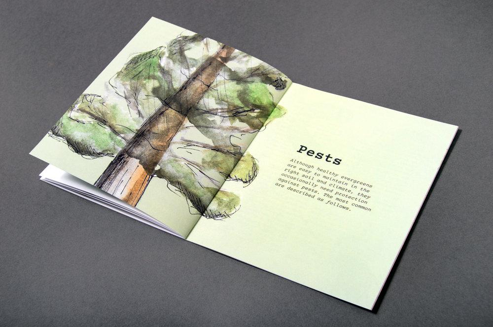evergreens3.jpg