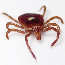 IMPORTANT PARASITE INFORMATION UPDATED FOR 2018 - Introducing The Lone Star Tick