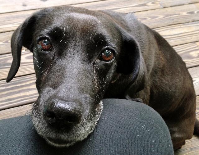 seniordog.jpg