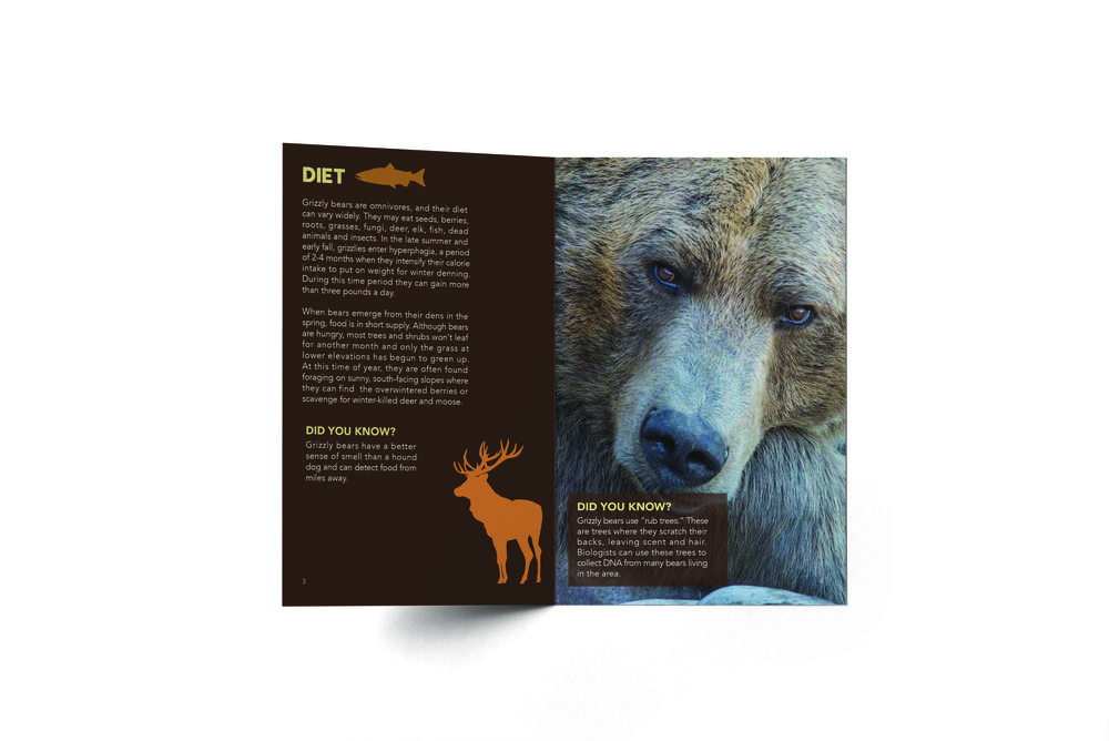 Grizzly Bear Pawpulation cont.