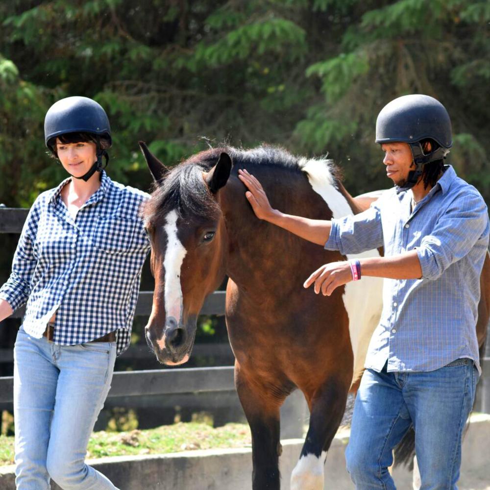Horse-assisted programmes_Bverzio.png