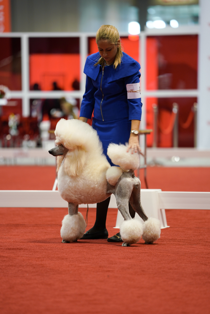 DSC00754-poodles (1 of 1).jpg