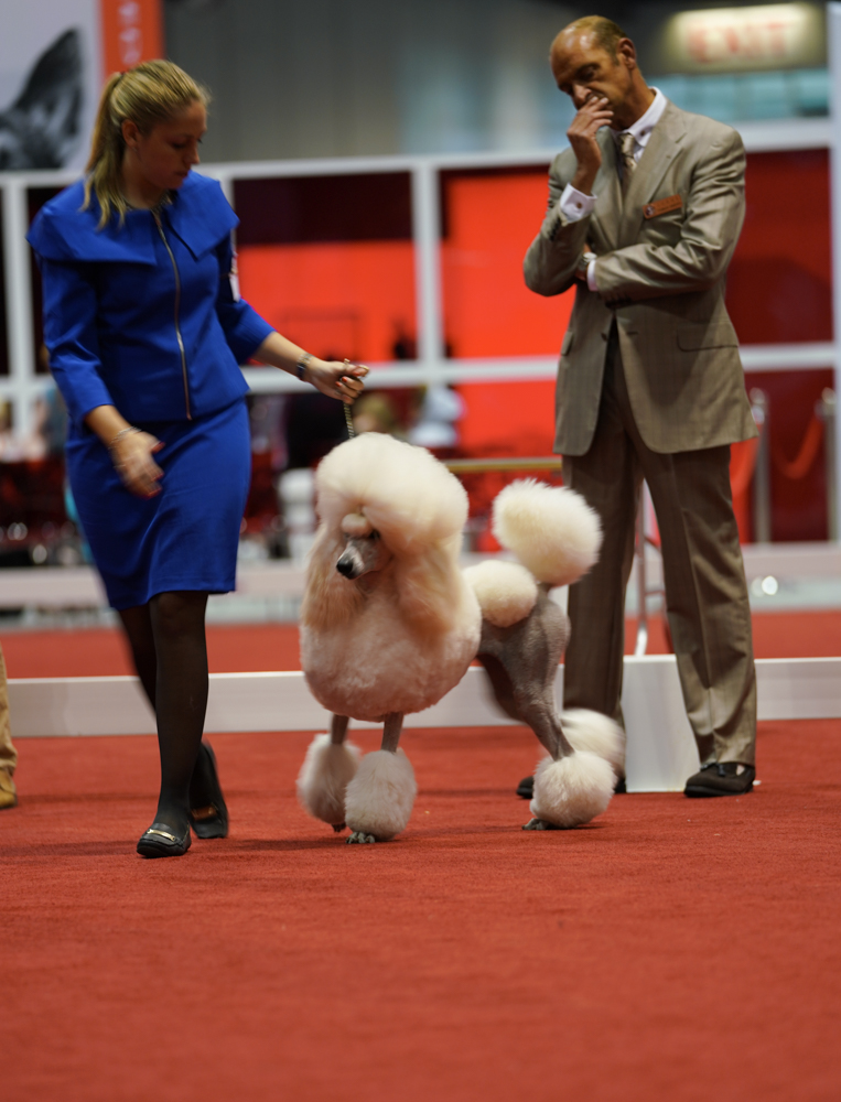 DSC00763-poodles (1 of 1).jpg