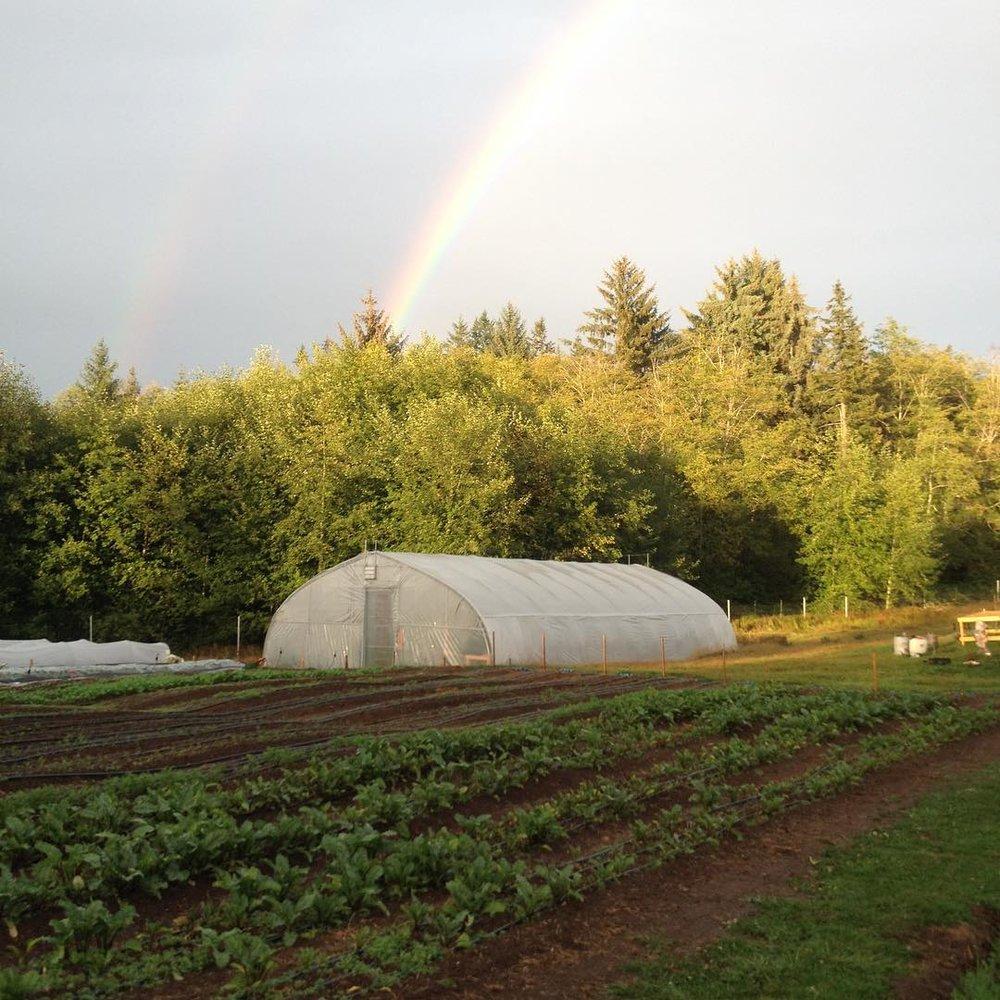 rainbow_greenhouse_2018.jpg
