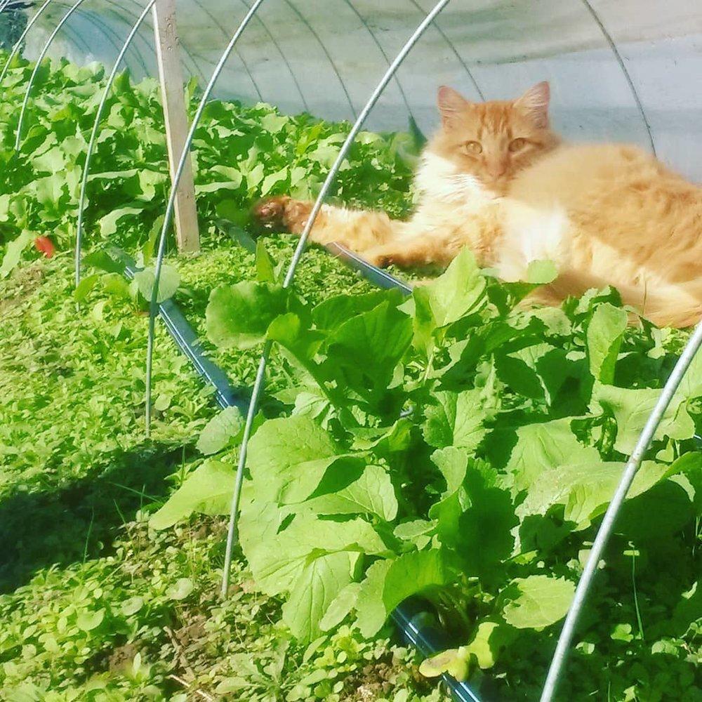 pumpkin_cat.jpg