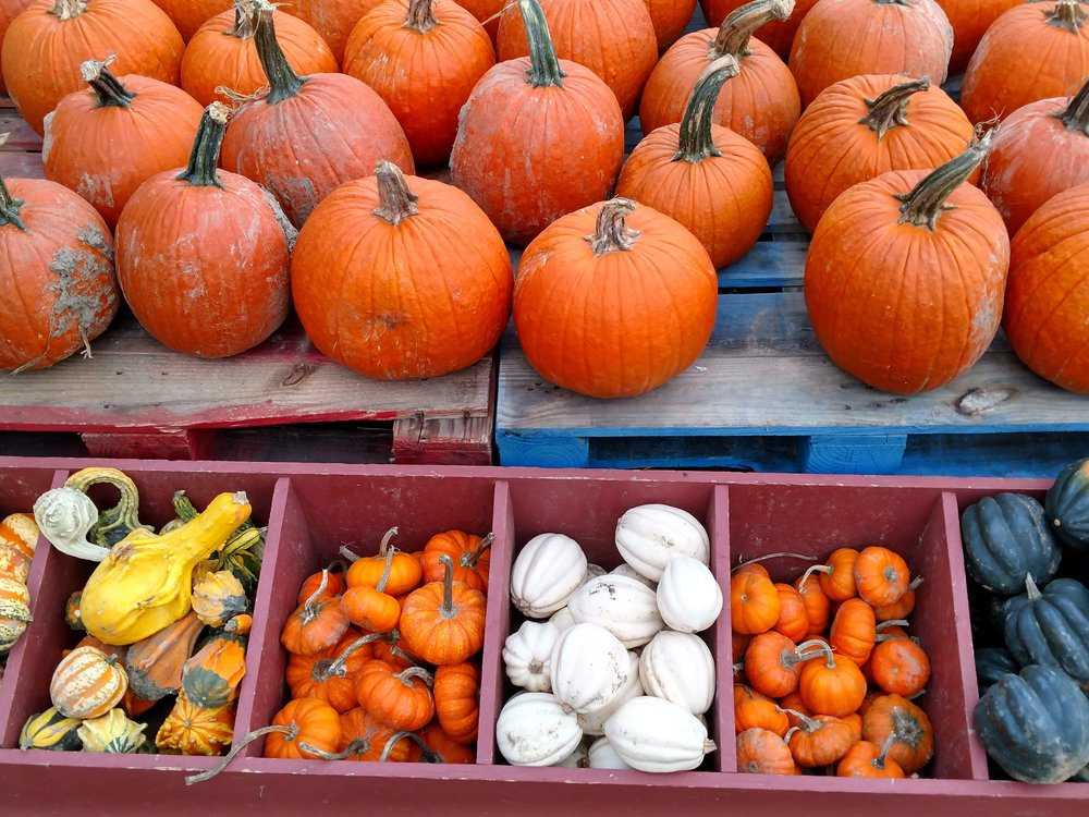 A small version of our homegrown pumpkins and gourds at my family's farm: Duffield's Farm.