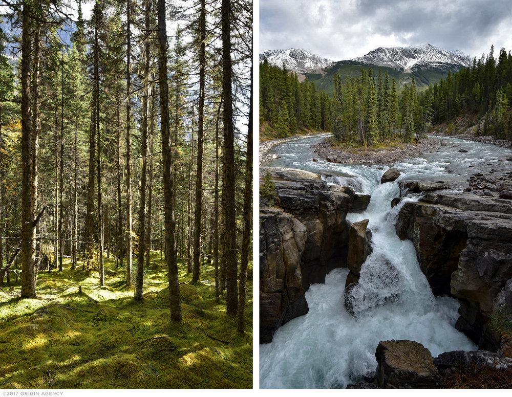 origin-agency-canada-forest.jpg