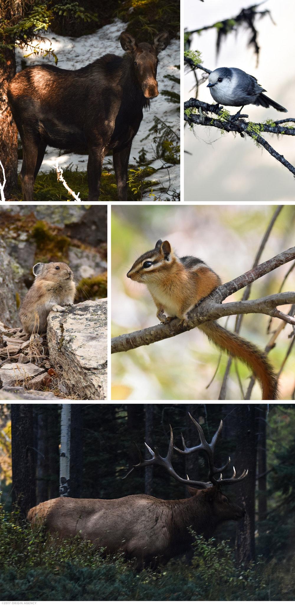 origin-agency-canada-wildlife.jpg