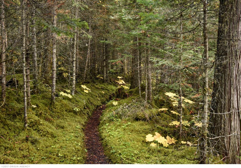 origin-agency-canada-trail.jpg
