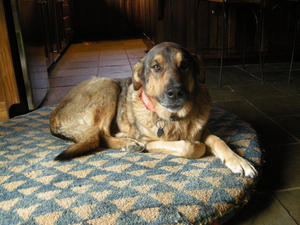 Our dog Franny