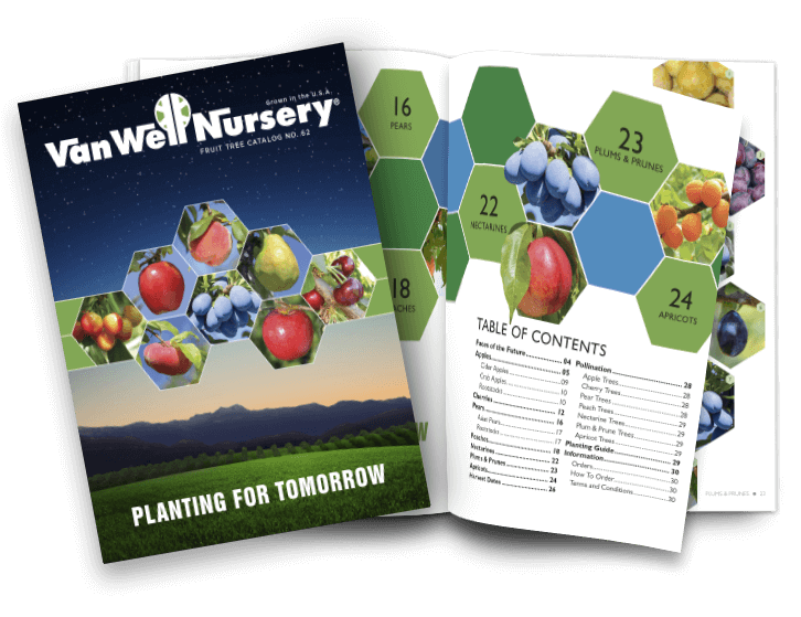 Fruit Tree Catalog No. 62 | 2018-2019 Season